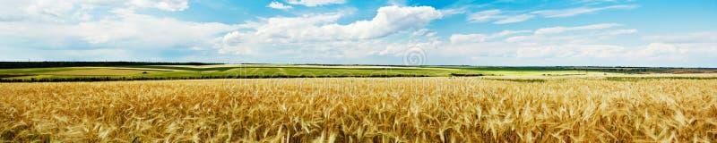 Vista panoramica di un campo di frumento fotografie stock