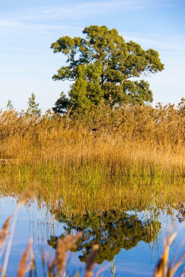 Vista panoramica di un osservatorio dell'uccello, nella La Marjal del parco naturale delle zone umide a Pego ed Oliva fotografia stock
