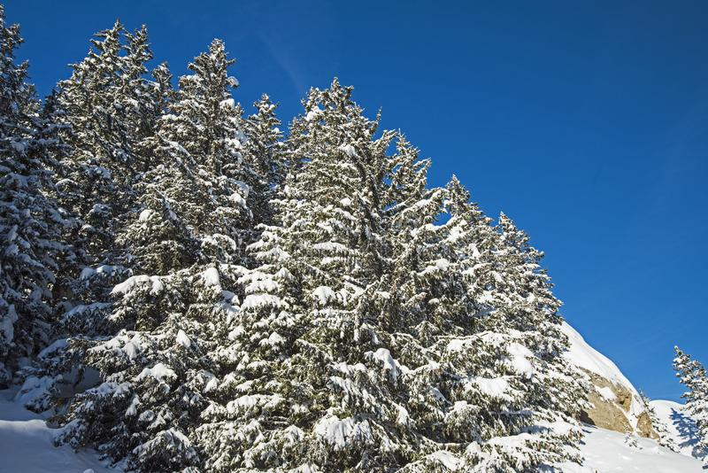 Vista panoramica giù una valle alpina della montagna con gli alberi della conifera fotografia stock