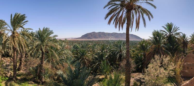 Vista panoramica sopra l'oasi delle palme da datteri, Figuig, Marocco fotografie stock