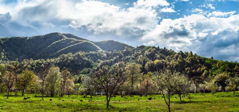 Vista panoramica su paesaggio con erba verde, le colline e gli alberi, tempo soleggiato, cielo nuvoloso immagine stock