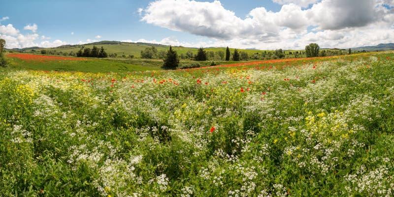 Panorama del Wildflower fotografia stock