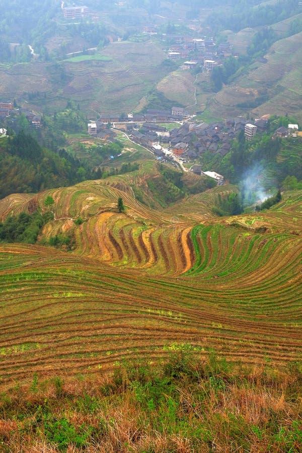 Vista panoramica verticale dei terrazzi variopinti del riso di Longsheng, vicino alla città cinese di Guilin fotografia stock
