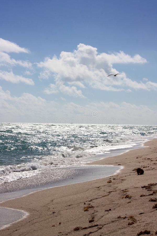 Vista para o mar em parte ensolarada da skyline em Miami Florida imagem de stock