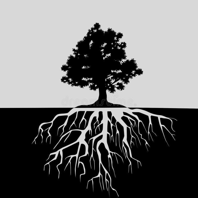Vista partida del roble y de sus raíces Ejemplo blanco y negro stock de ilustración
