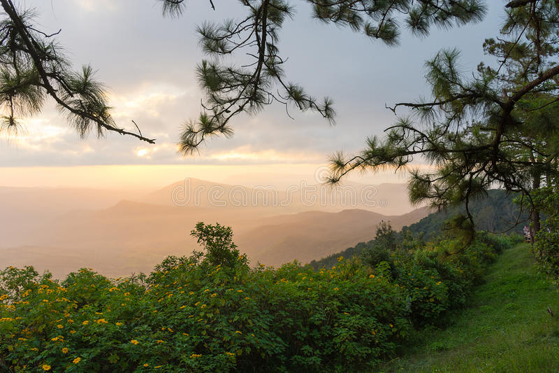 Vista piacevole di paesaggio di mattina a Phurua, Loei fotografia stock libera da diritti