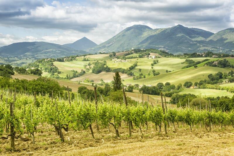 Vista piacevole in Italia Marche vicino a Camerino fotografie stock libere da diritti