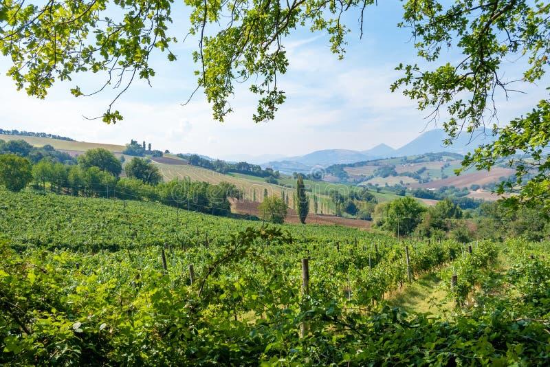 Vista piacevole in Italia Marche vicino a Camerino fotografia stock