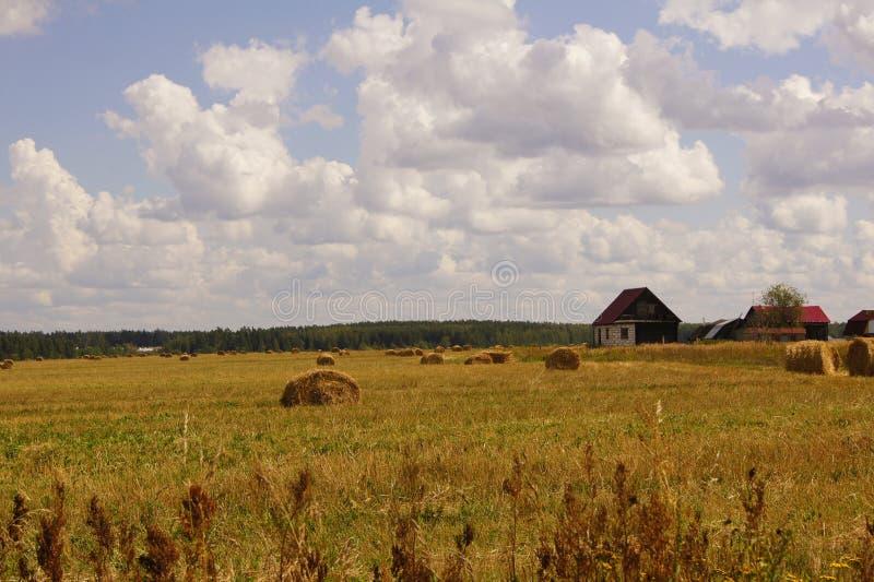 Vista pitoresca das polias bonitas do campo e do feno de grama verde sob o céu nebuloso e a luz do sol azuis Subúrbios de Moscou, imagens de stock royalty free