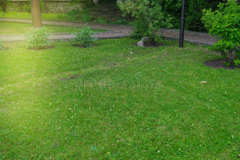 Vista pittoresca nel parco della città di estate sui percorsi e sul prato inglese con erba verde nei raggi del sol levante all'al fotografie stock libere da diritti