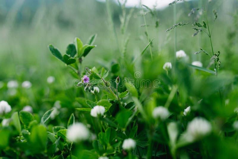 Vista poética da flor só pequena no campo exterior natural com durante dia nebuloso temperamental do outono imagens de stock