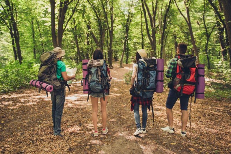 Vista posterior de cuatro amigos de los turistas que caminan en el bosque en el summ imágenes de archivo libres de regalías