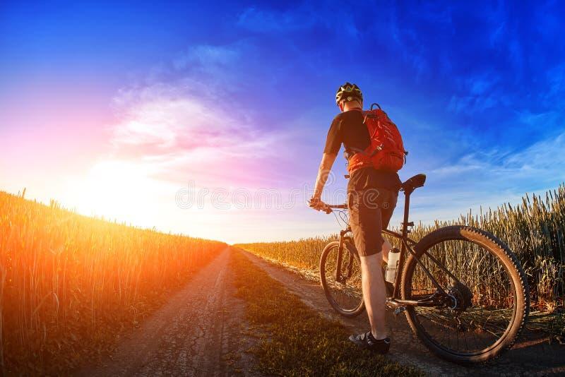 Vista posterior de la bici de montaña del montar a caballo del ciclista en el rastro contra el cielo hermoso foto de archivo libre de regalías