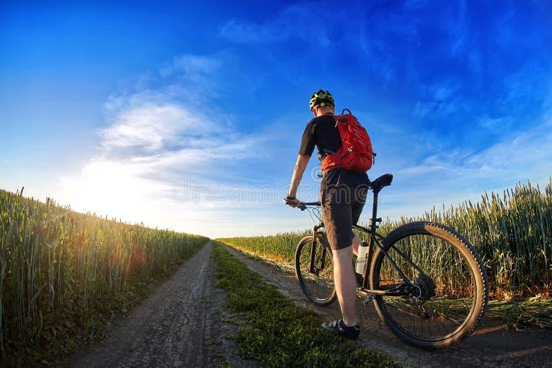 Vista posterior de la bici de montaña del montar a caballo del ciclista en el rastro contra el cielo hermoso foto de archivo