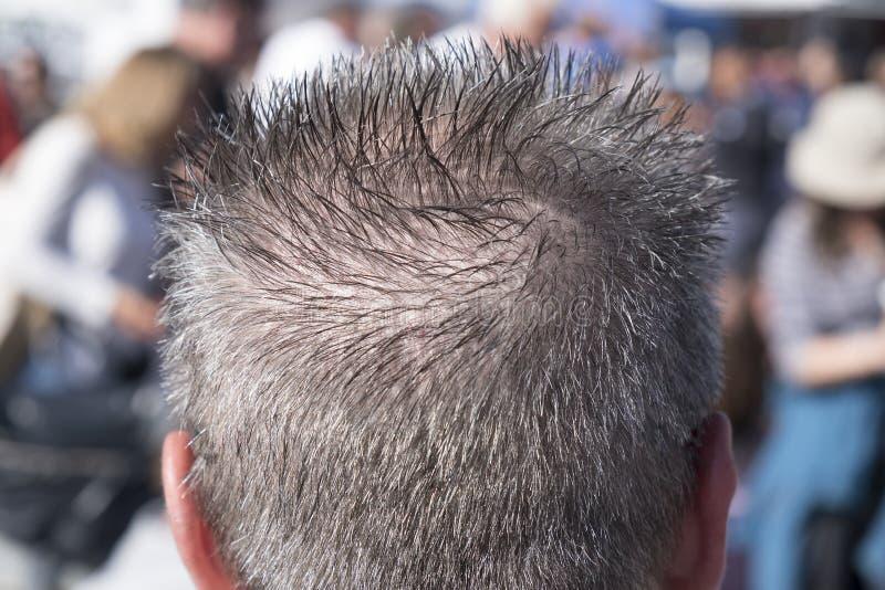 Vista posterior de la cabeza con el pelo gris claveteado foto de archivo libre de regalías