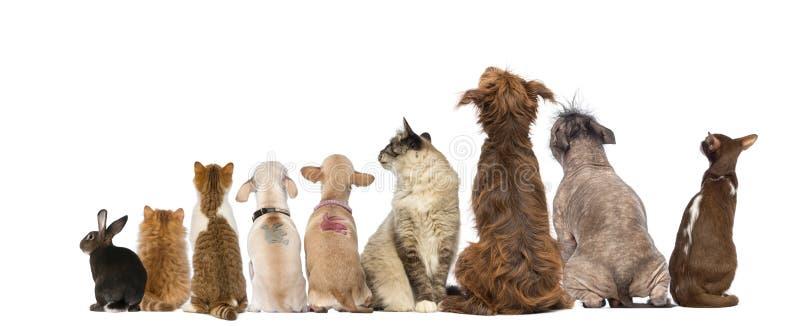 Vista posterior de un grupo de animales domésticos, perros, gatos, conejo, sentándose fotos de archivo libres de regalías