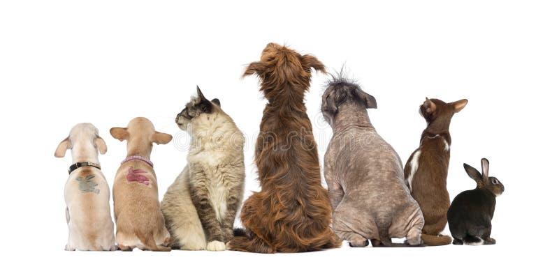 Vista posterior de un grupo de animales domésticos, perros, gatos, conejo, sentándose imágenes de archivo libres de regalías