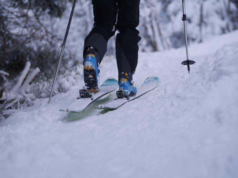 Vista posterior del esquí de la persona en bosque imagenes de archivo