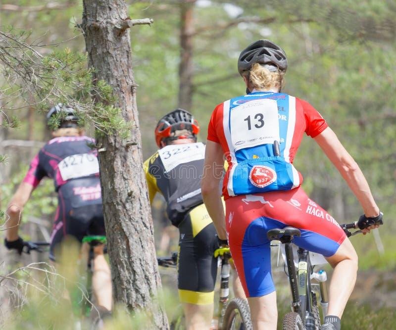 Vista posterior del grupo de ciclistas de la bici de montaña en el bosque fotografía de archivo