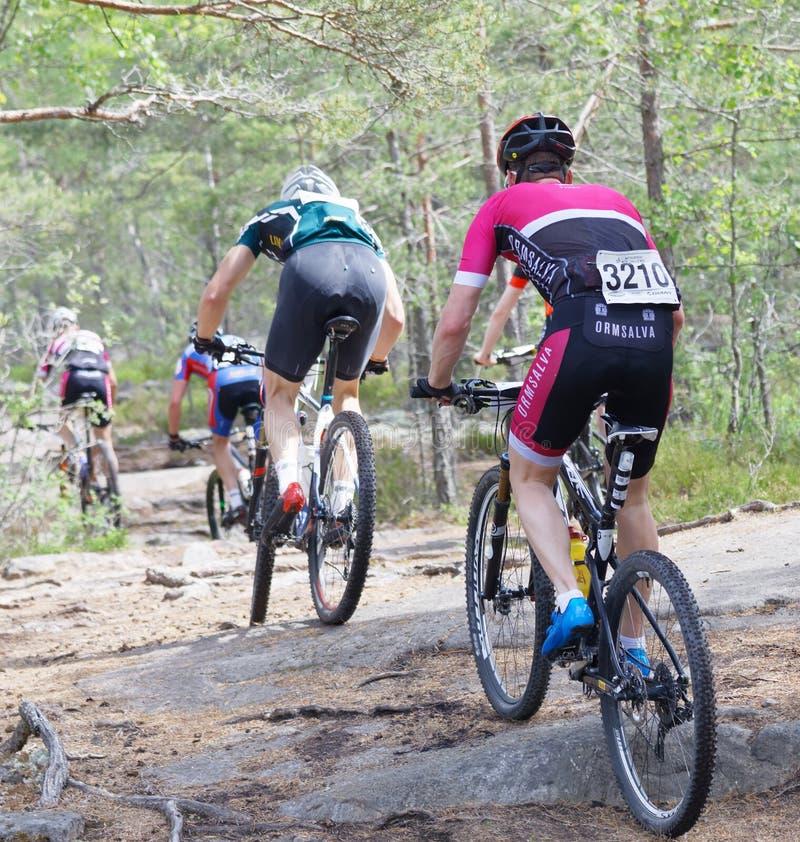 Vista posterior del grupo de ciclistas de la bici de montaña en el bosque imágenes de archivo libres de regalías