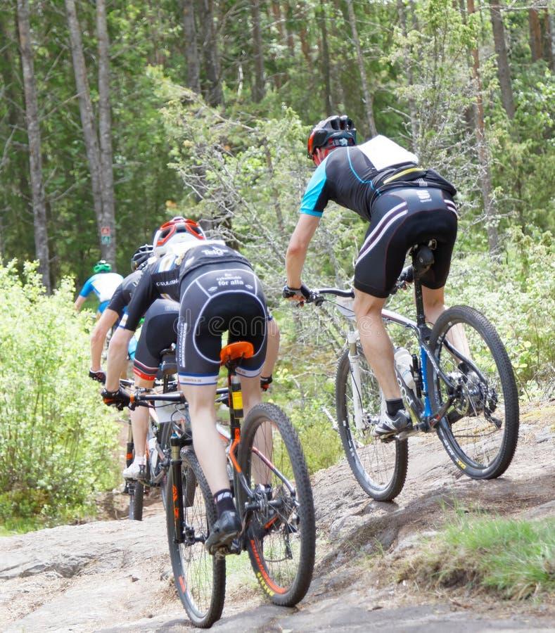 Vista posterior del grupo de ciclistas de la bici de montaña en el bosque foto de archivo