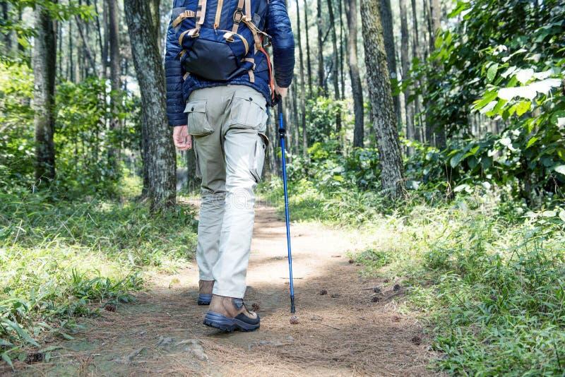 Vista posterior del hombre asiático del viajero con la mochila y el polo del senderismo fotografía de archivo