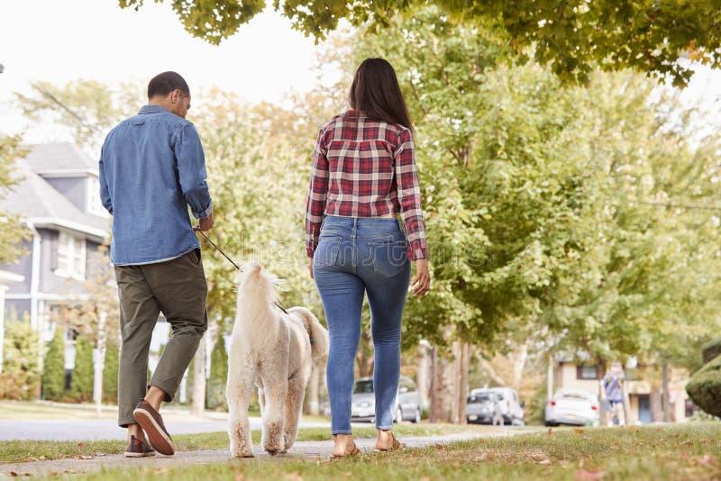 Vista posterior del perro que camina de los pares a lo largo de la calle suburbana fotografía de archivo