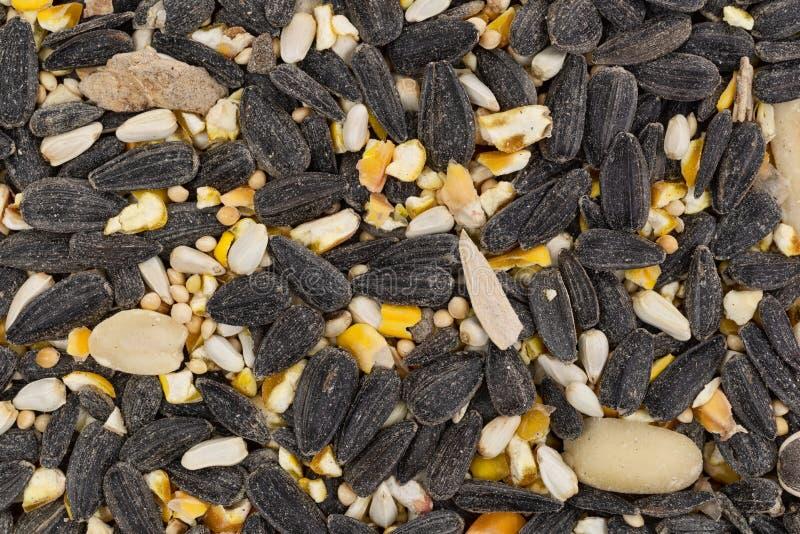 Vista próxima do alimento de pássaro maioria com sementes e painço de girassol imagens de stock