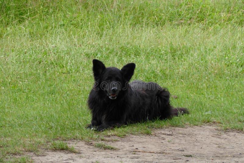 Vista preta do cão de guarda imagem de stock