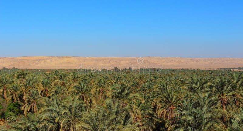 Vista principal dos oásis da palmeira com as montanhas do deserto no fundo fotos de stock