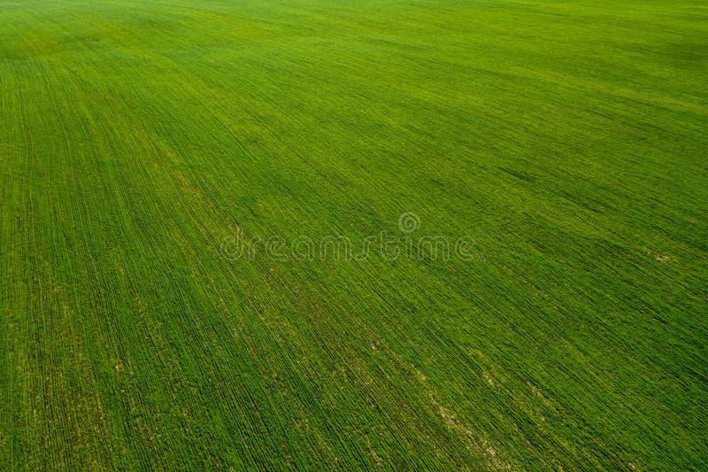 Vista a?rea de campos e da planta??o ar?v?is Campo imagem de stock