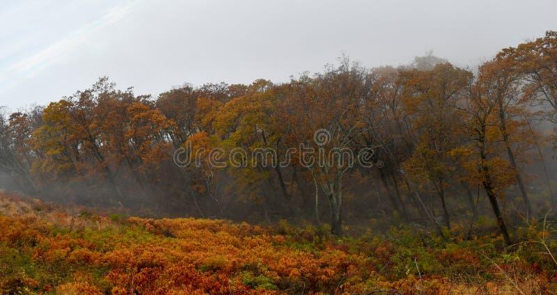 Vista a?rea de florestas da montanha em cores brilhantes do outono imagens de stock