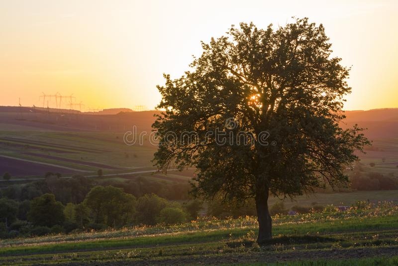 Vista reservada y pacífica del árbol verde grande hermoso en la puesta del sol GR fotografía de archivo libre de regalías