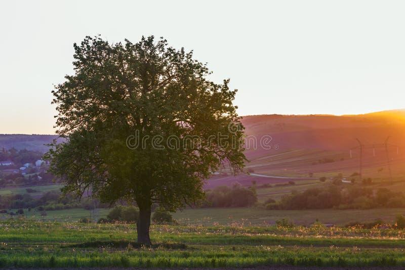 Vista reservada y pacífica del árbol verde grande hermoso en la puesta del sol GR imagenes de archivo