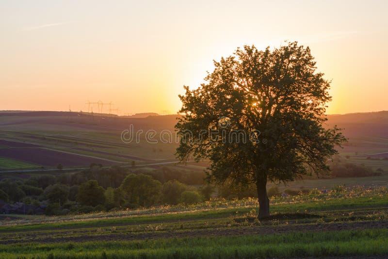 Vista reservada y pacífica del árbol verde grande hermoso en la puesta del sol GR imagen de archivo