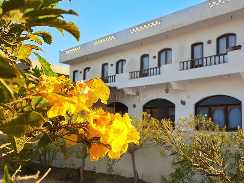 Vista Rihana Guest House, Marsa Alam del mare fotografia stock libera da diritti