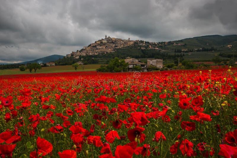 Vista romântica da vila medieval do Trevi em Úmbria com campo bonito de papoilas vermelhas no dia chuvoso fotografia de stock
