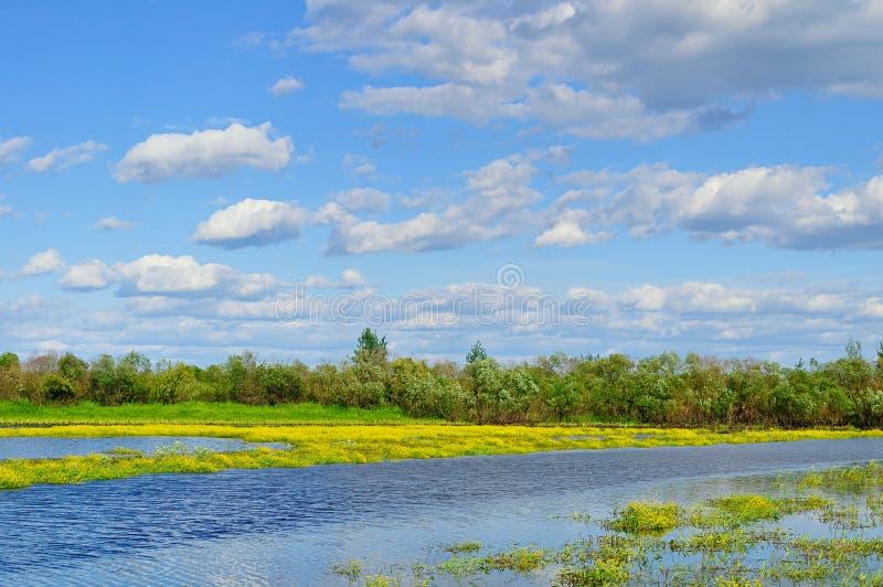 Vista rurale del paesaggio dell'acqua di estate - paesaggio di piccolo fiume nel giorno soleggiato di estate fotografia stock