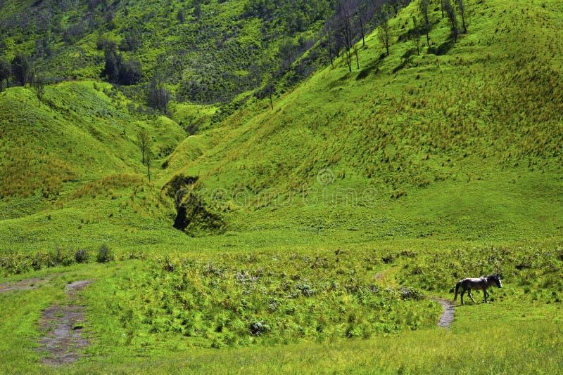 Vista scenica del campo di erba verde dei campi di rotolamento dell'azienda agricola di verde della campagna con il cavallo immagine stock