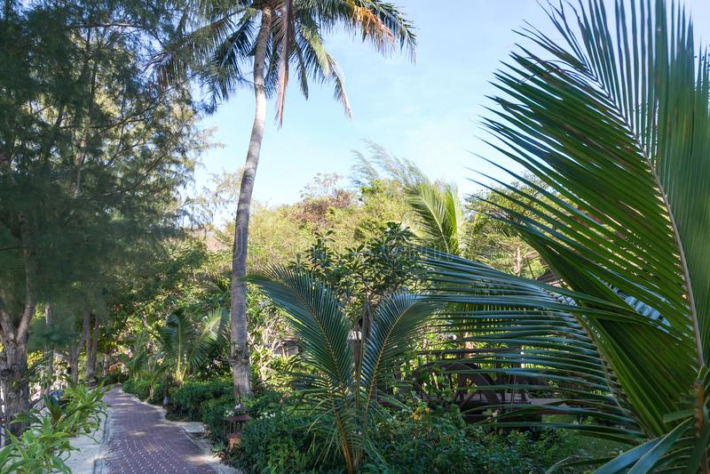 vista scenica delle palme, delle piante e del percorso verdi, phi immagini stock libere da diritti