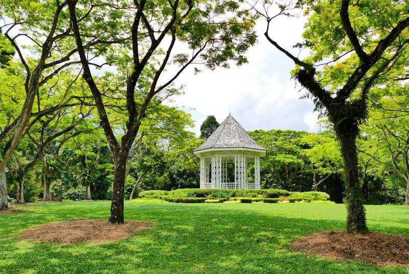Vista scenica dentro i giardini botanici di Singapore fotografia stock libera da diritti