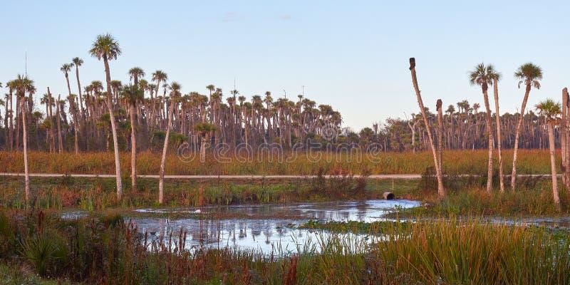 Vista scenica di un ambiente delle zone umide in Florida centrale fotografia stock libera da diritti