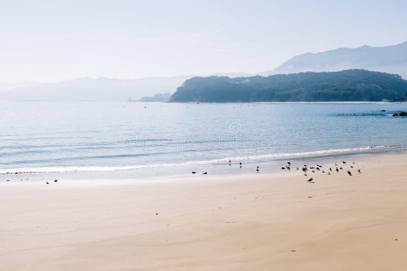 Vista scenica di una moltitudine di gabbiani sulla spiaggia nebbiosa fotografie stock