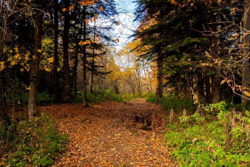 Vista scenica di una via della foresta in foresta fotografia stock libera da diritti