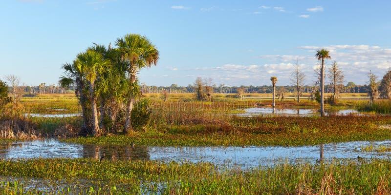 Vista scenica in un'area delle zone umide di Florida fotografie stock libere da diritti