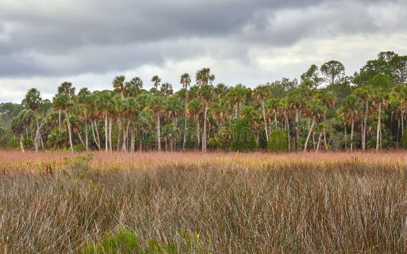 Vista scenica vicino a Spring Hill, Florida fotografie stock