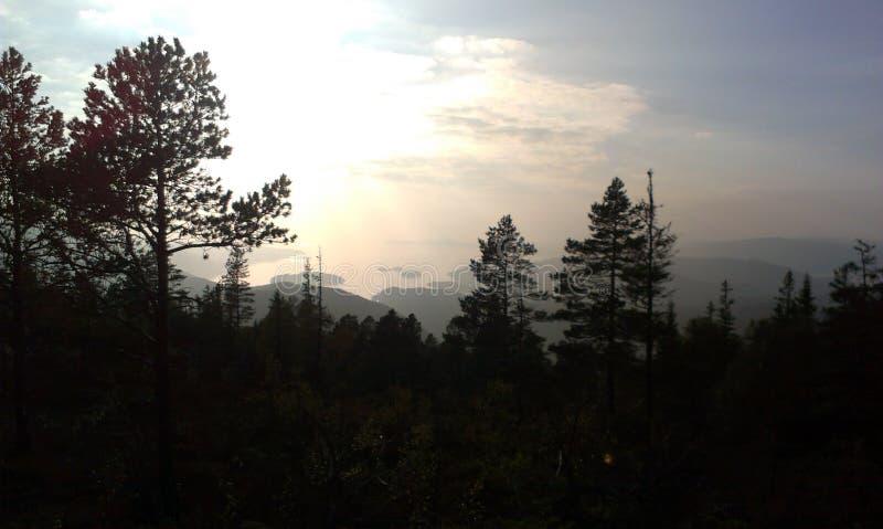 Vista scura della foresta immagine stock