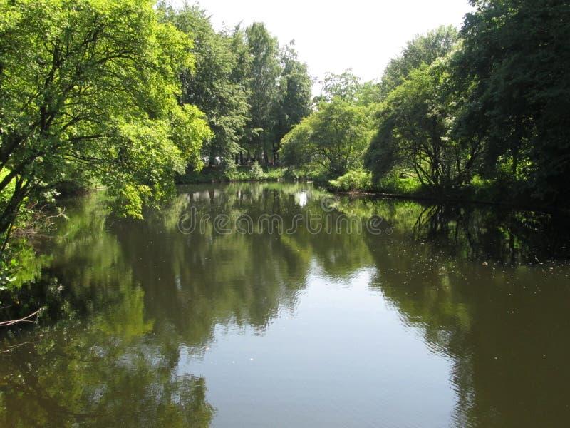 Vista serena del lago allineata con gli alberi fotografia stock