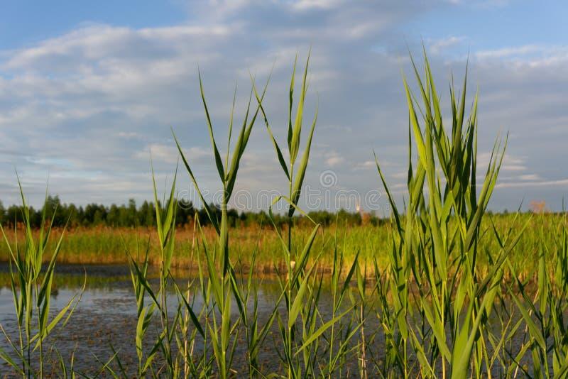 Vista sobre campos agrícolas com uma lagoa pequena e nuvens relevantes no céu azul A paisagem está na borda de imagem de stock royalty free