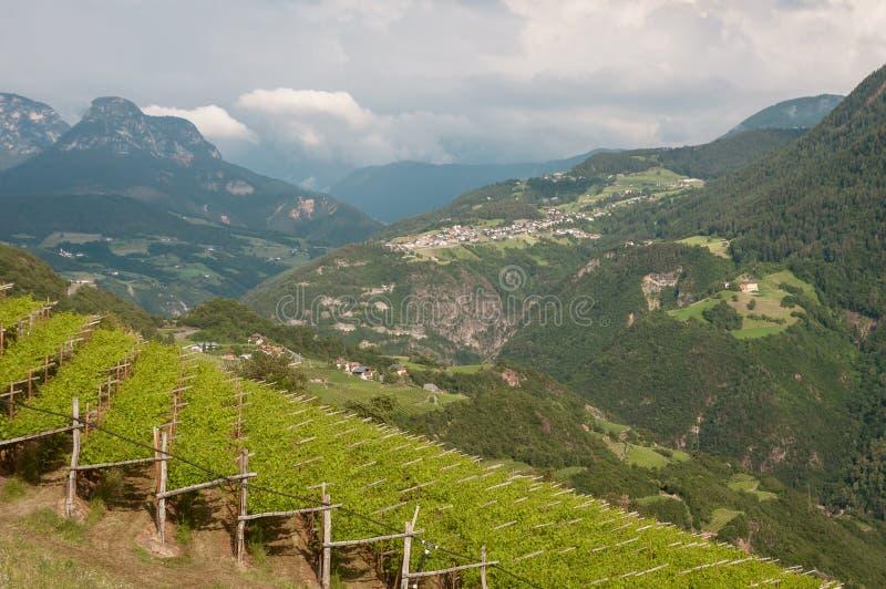 Vista sobre jardas do vinho em Áustria fotografia de stock royalty free